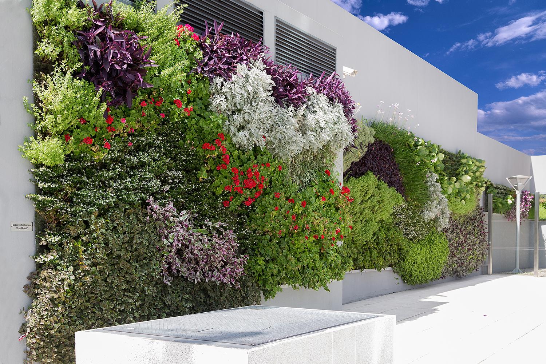 Jardin vertical bienvenido a la web for Jardin vertical liofilizado